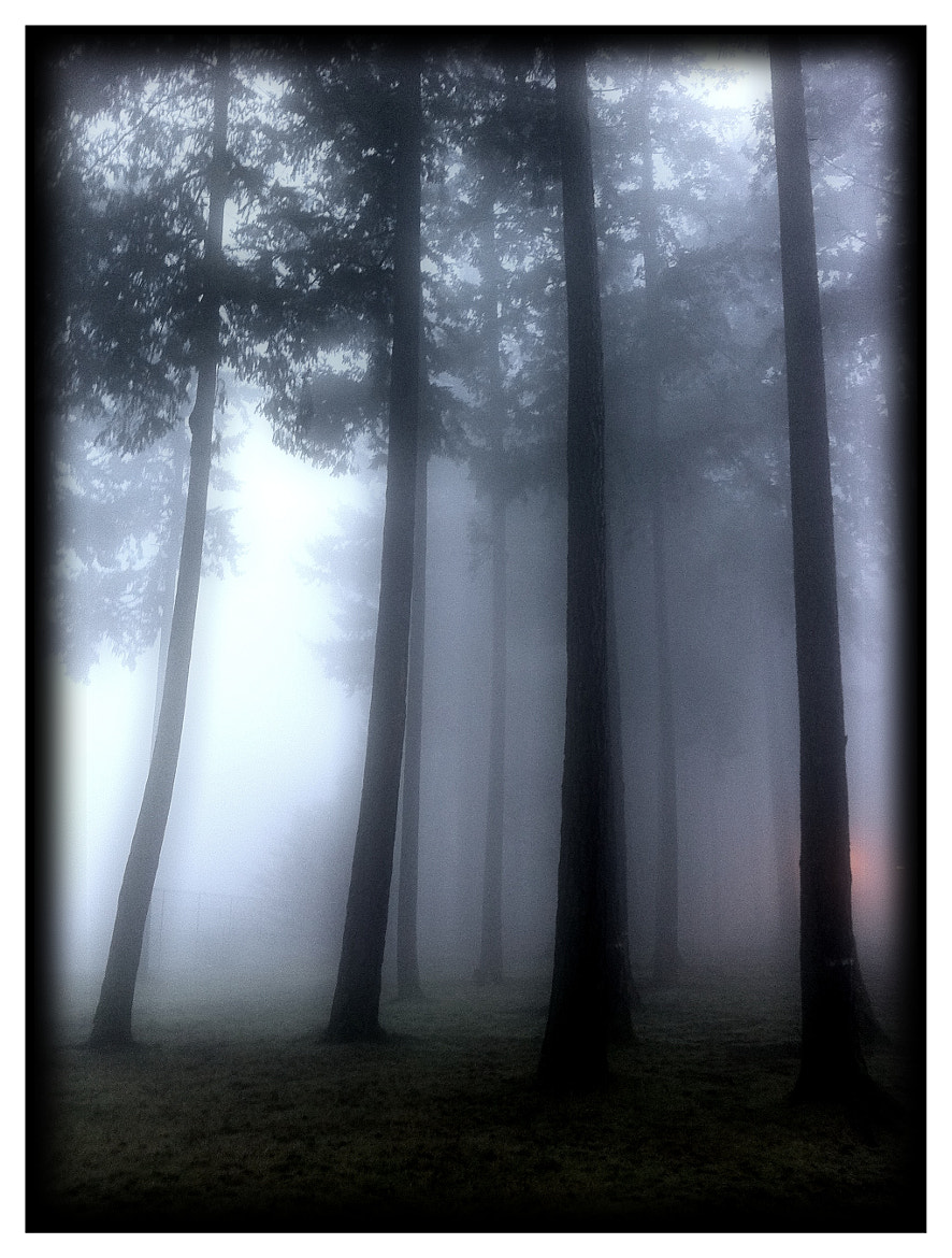 Photograph Fog Forest by Gary Marshall on 500px