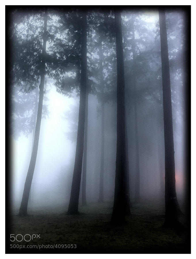 iPhone image of a wonderful foggy morning.