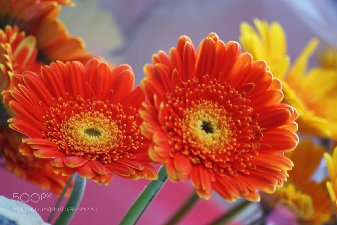 Photograph Beautiful Flowers by Daniel  Marthin on 500px