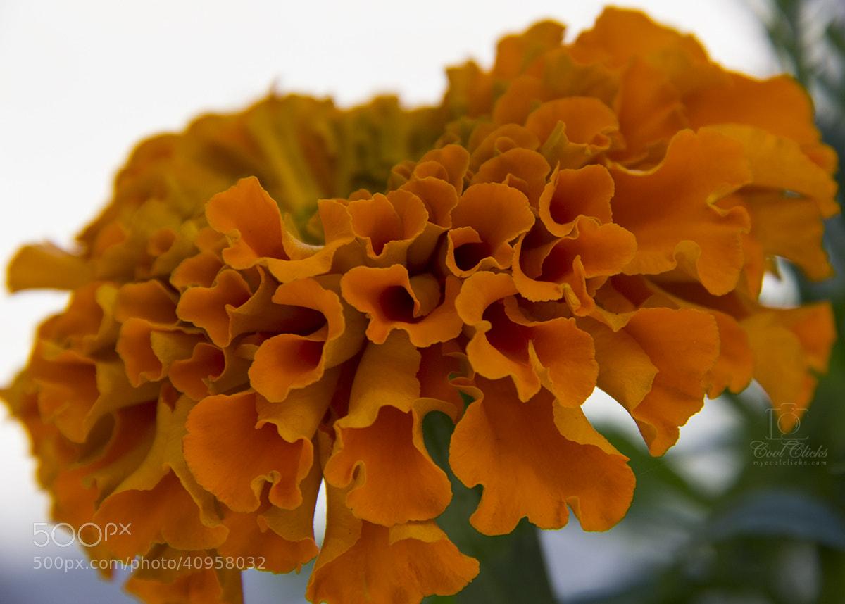 "Photograph Flowers whisper ""Beauty!"" by Saroj Pandey #CoolClicks on 500px"