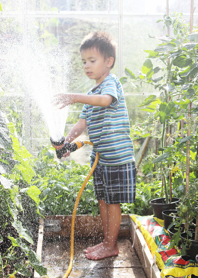 Watering the Greenhouse