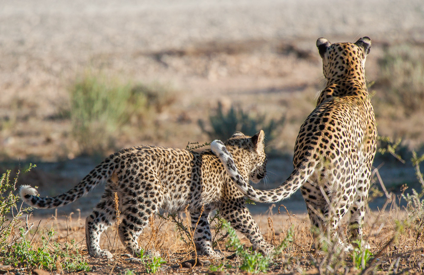 Photograph Mothers touch by Bridgena Barnard on 500px