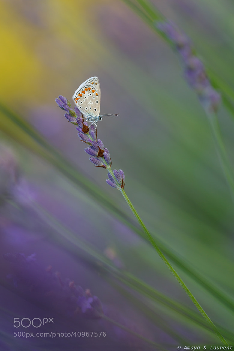 Photograph Pap in purple by Amaya Bercetche on 500px