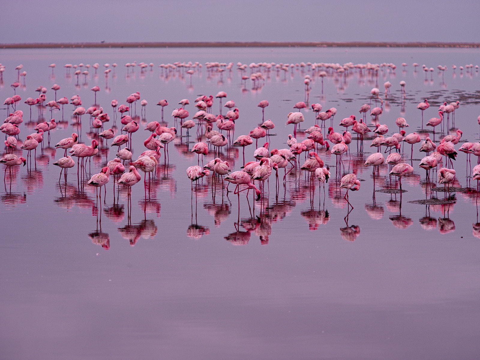 Photograph Pink World by Qwerty_BY on 500px