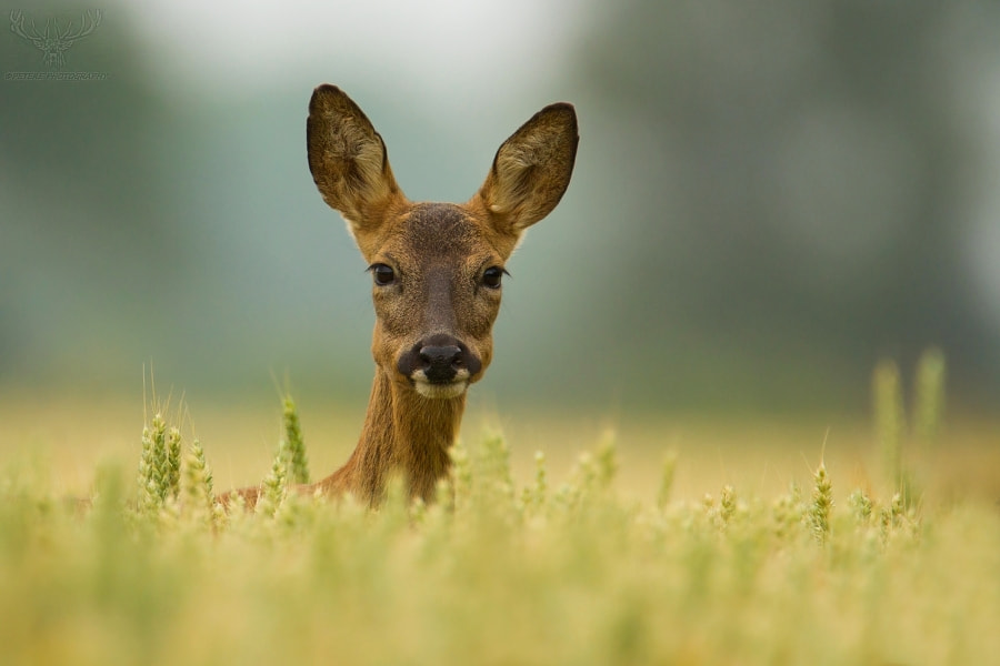 Photograph doe by Peter Kralik on 500px