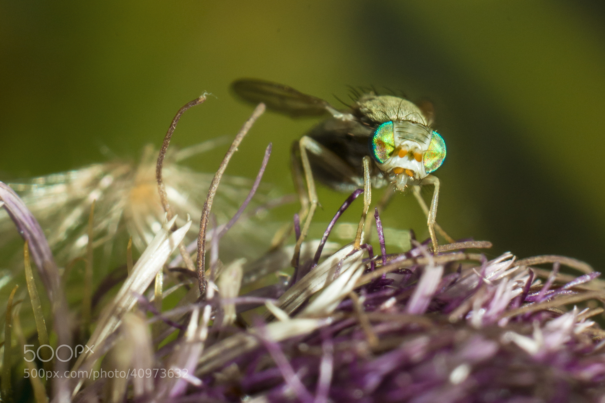 Photograph Green eyes by Alexej Mecheriakov on 500px