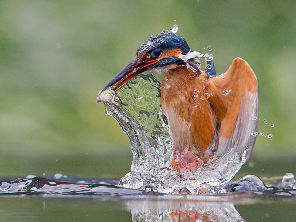 Photograph Liquid Lunch by Jamie MacArthur on 500px