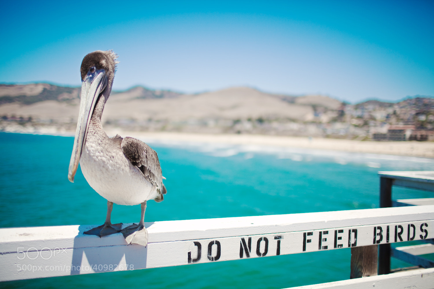 Photograph Do Not Feed Birds by Jinna van Ringen on 500px