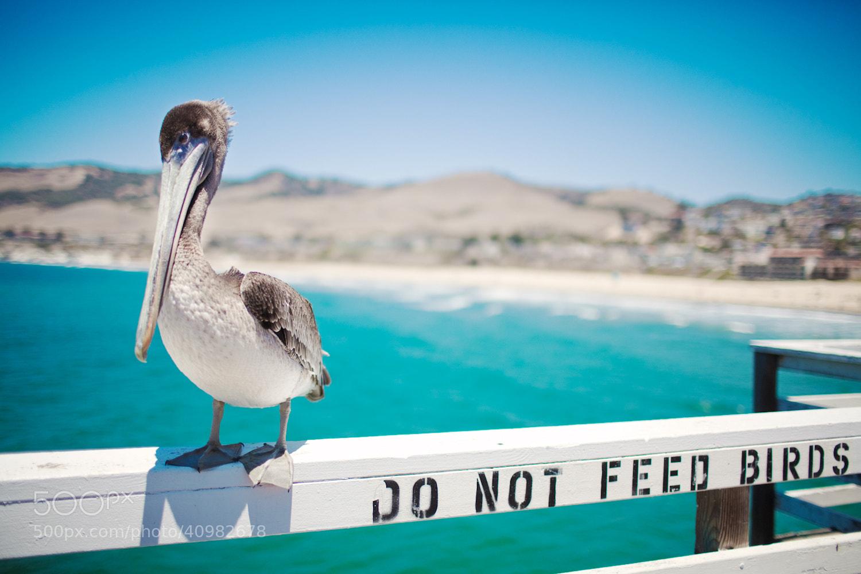 Photograph Do Not Feed Birds by Jinna van Ringen on 500px