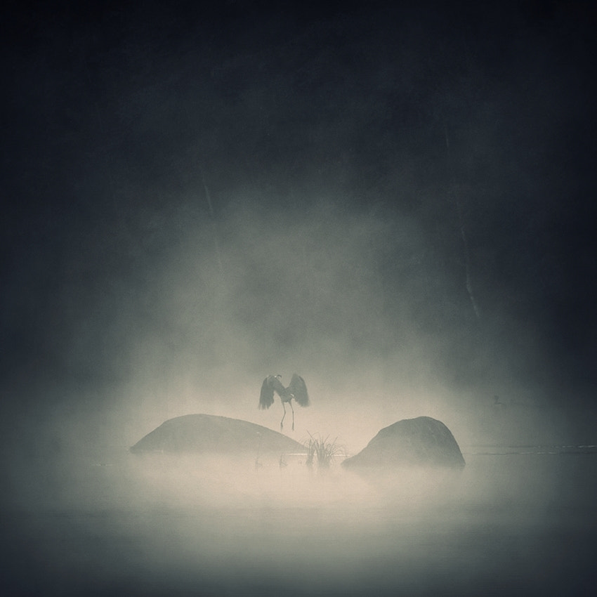 Photograph dancing in the mist by Sebastian Luczywo on 500px