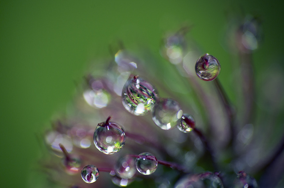 Photograph rain drops by Justas R on 500px