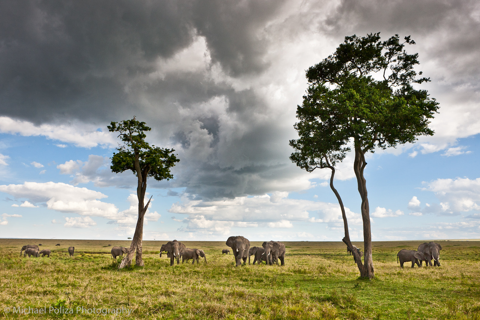 Photograph Elephant Herd by Michael Poliza on 500px