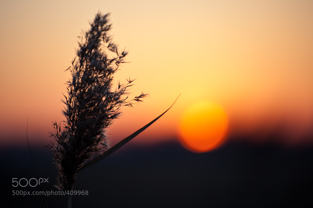 Photograph End Of Day by Steffen Göthling on 500px