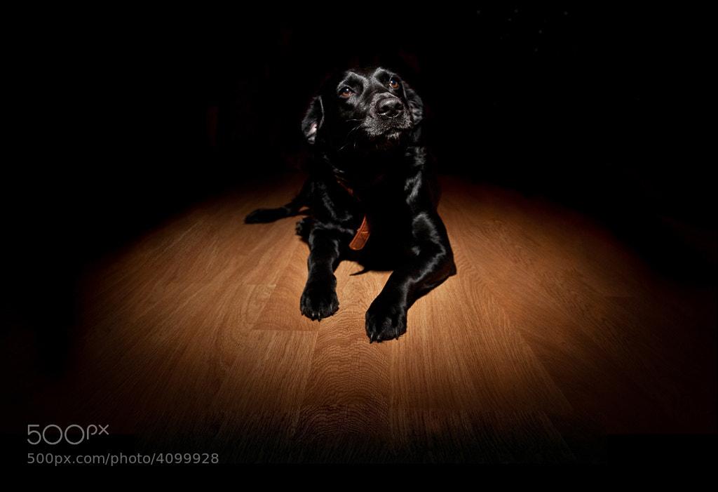 Photograph Cleo by Richard Pardon on 500px