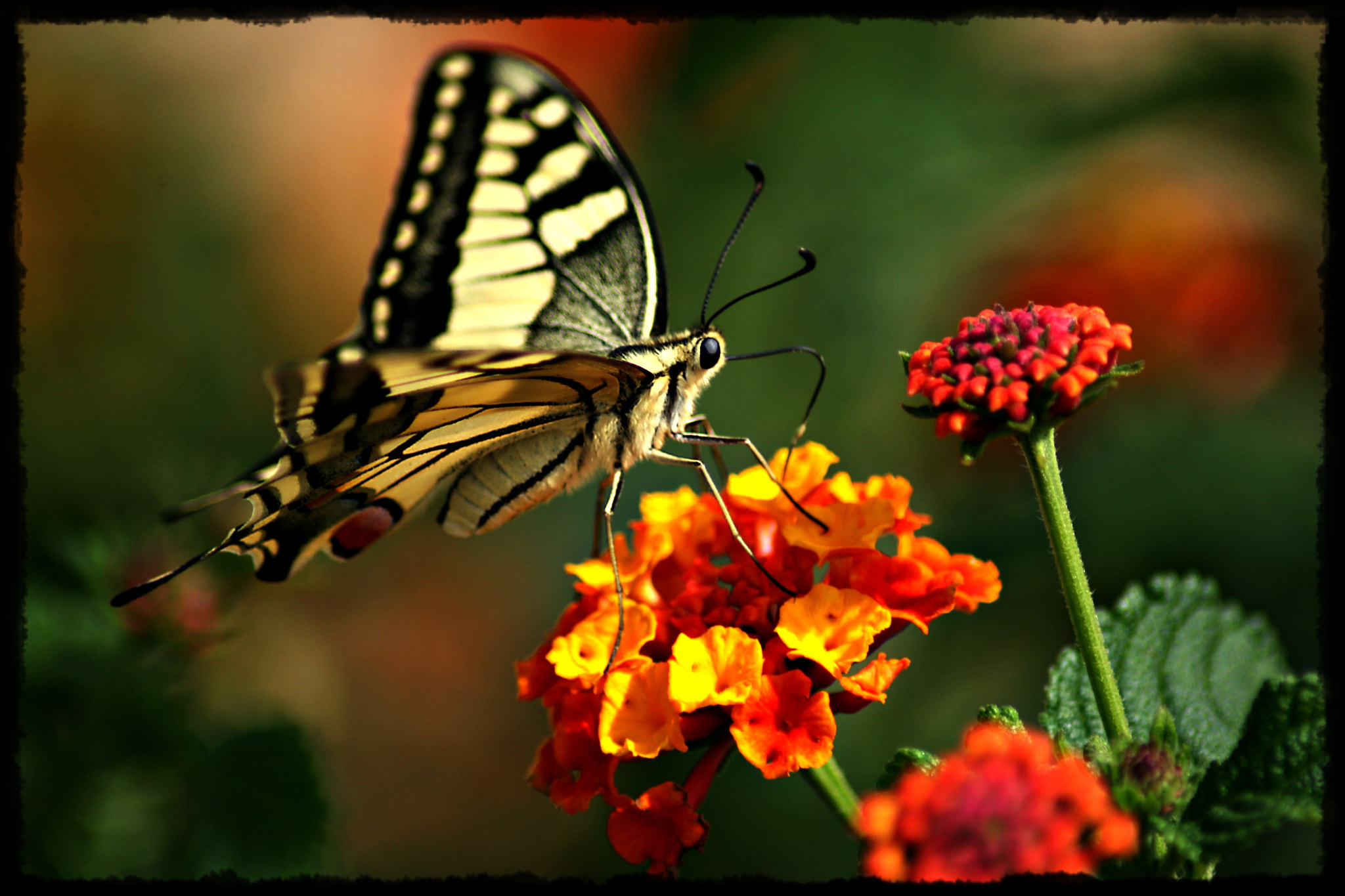 Photograph Mariposa by Jaime Vilches on 500px