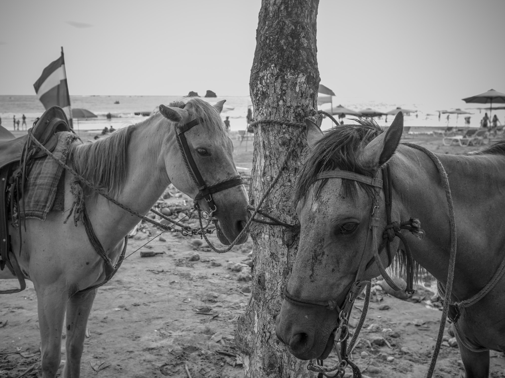 Photograph Beached Horses by Gil Garber on 500px