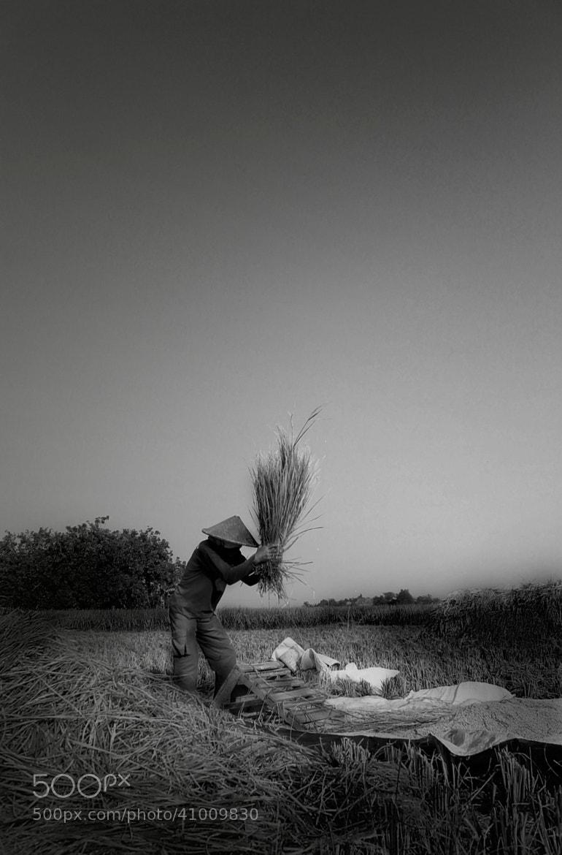 Photograph Ngagebot by bonifasius  wahyu adi on 500px
