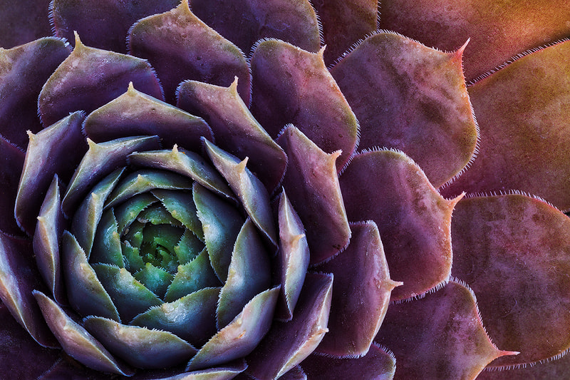 Photograph A Pretty Plant... by Sarah Marino on 500px