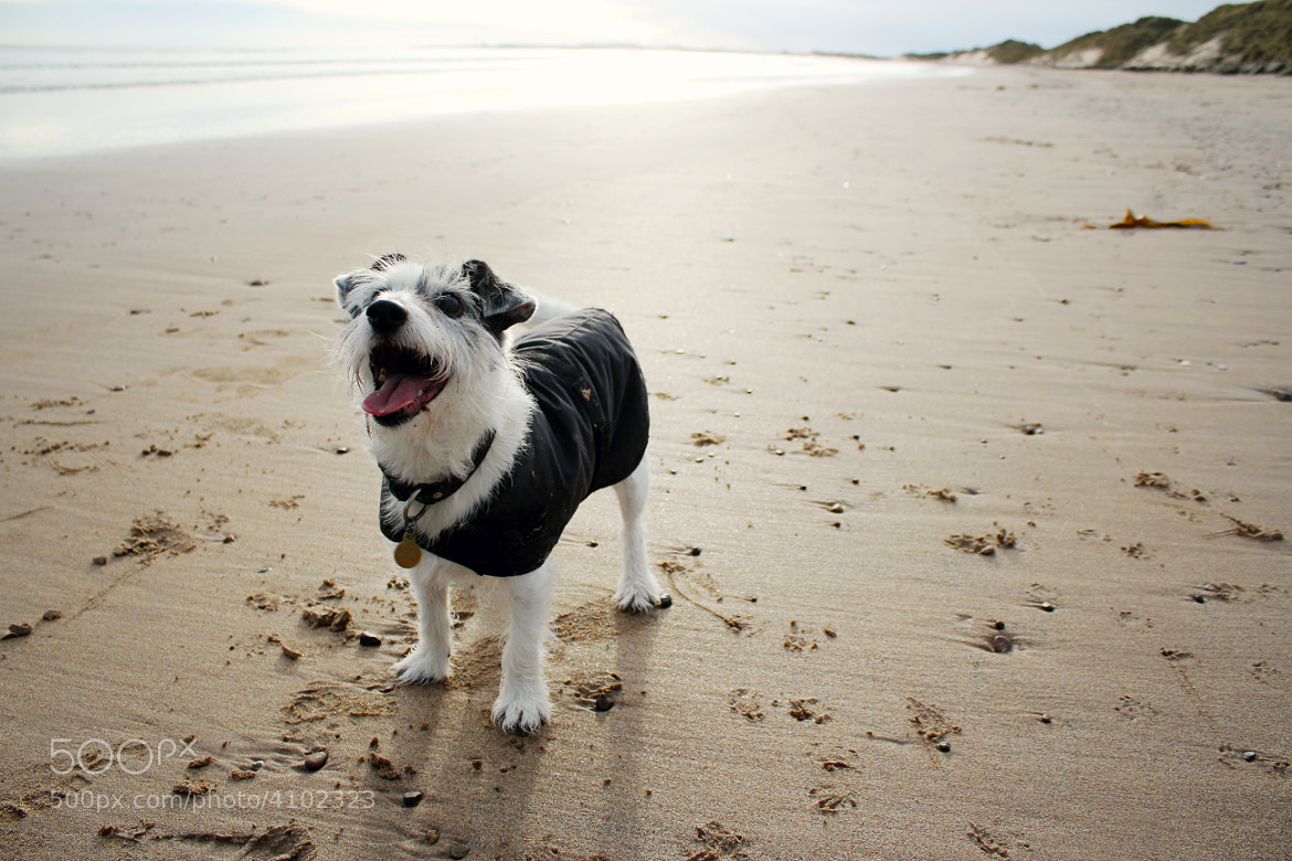 Photograph Happy Pooch by Samantha Sunderland on 500px