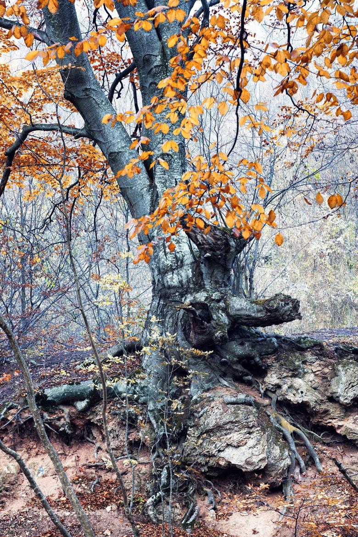 Photograph Nature 13 by Mihailo Radičević on 500px