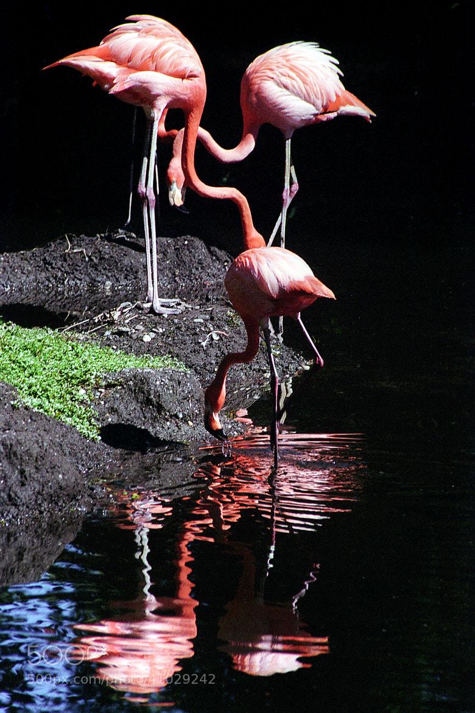 Photograph Bronx zoo by Partha Sen on 500px
