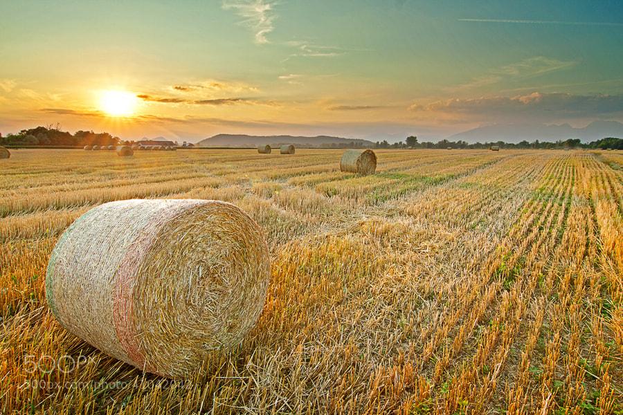 Photograph Grain Harvesting by Miha Mozer on 500px