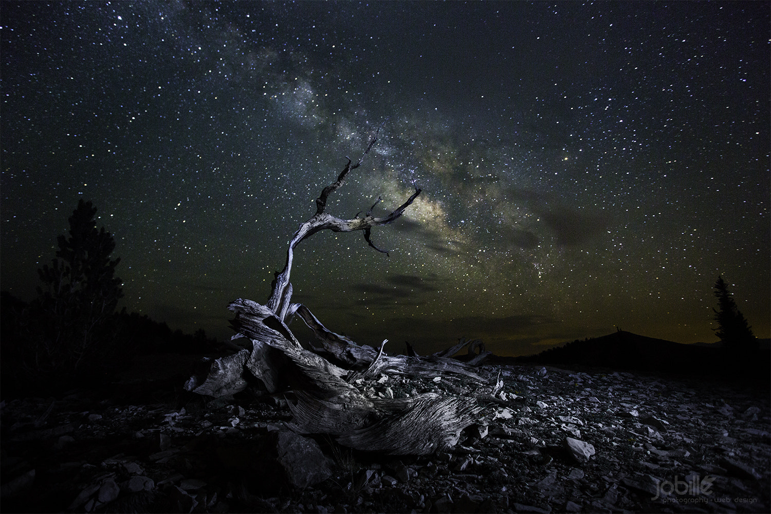 Photograph Dead Ancient Bristlecone pine by Jerome Obille on 500px