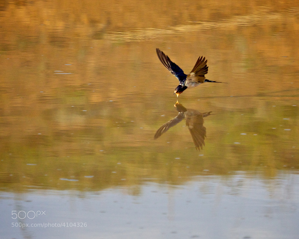 Photograph High speed, low pass by Mark Waite on 500px