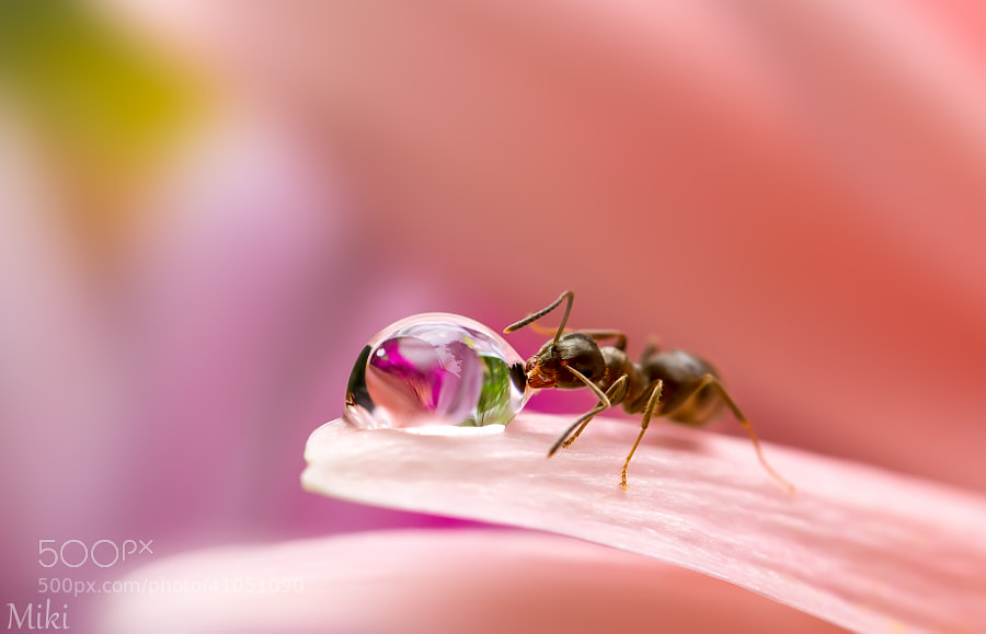 Photograph The drinker by Miki Asai on 500px