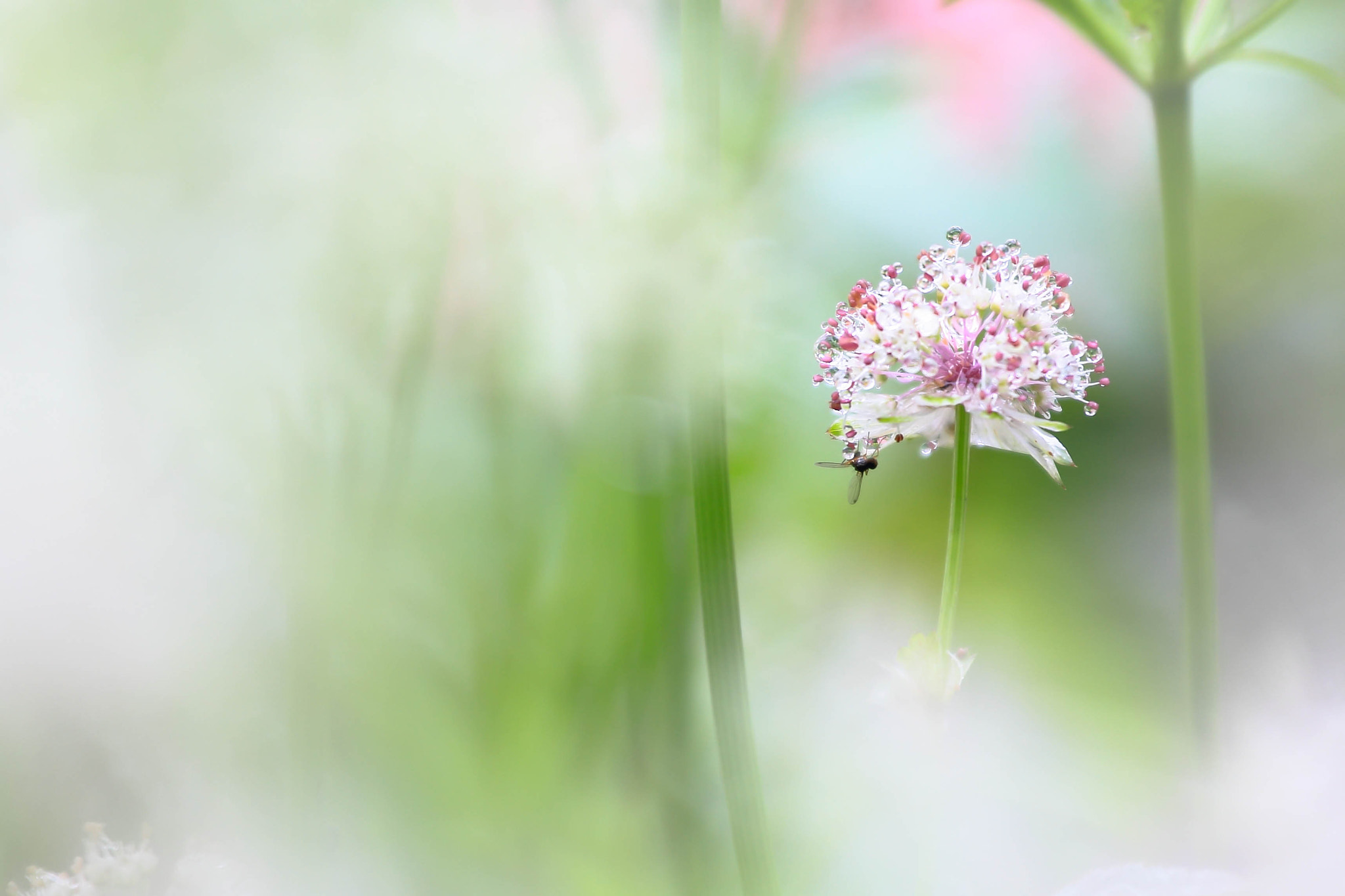 Photograph Sheltering under the flower by tooomo_ chiiin on 500px