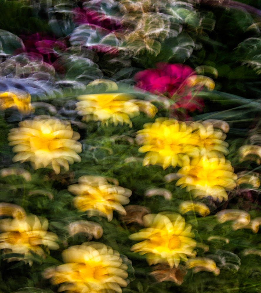 Photograph Motion Flowers by Paul Bartell on 500px