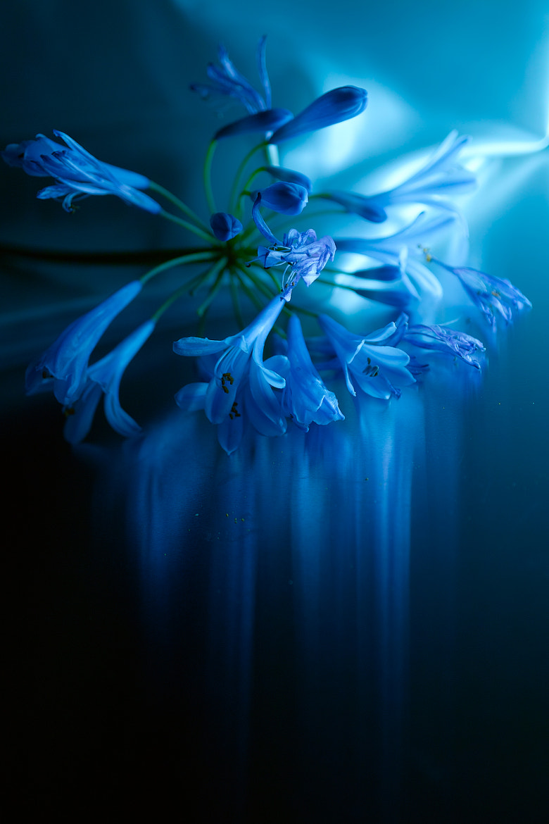 Photograph Impressionism~Light traces of blue by Lafugue Logos   on 500px