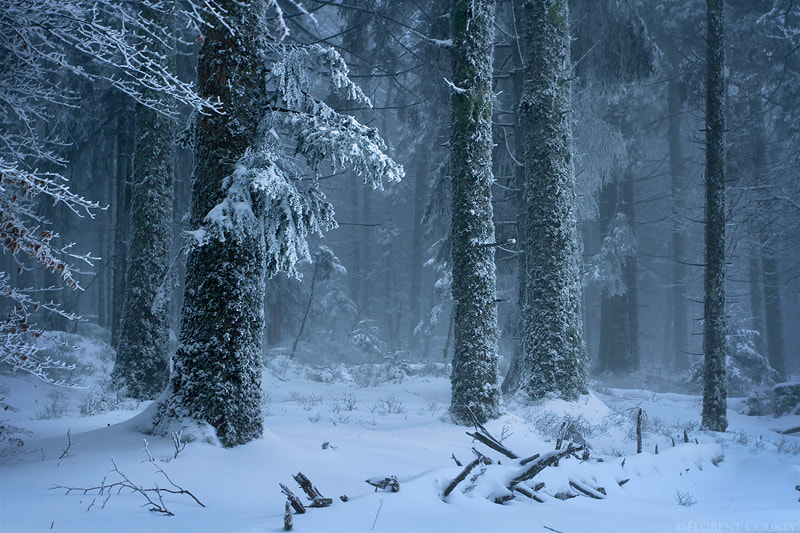 Photograph Frozen Forest by Florent Courty on 500px
