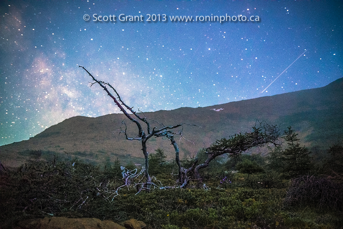 Photograph Gnarled in the Tablelands by Scott Grant on 500px