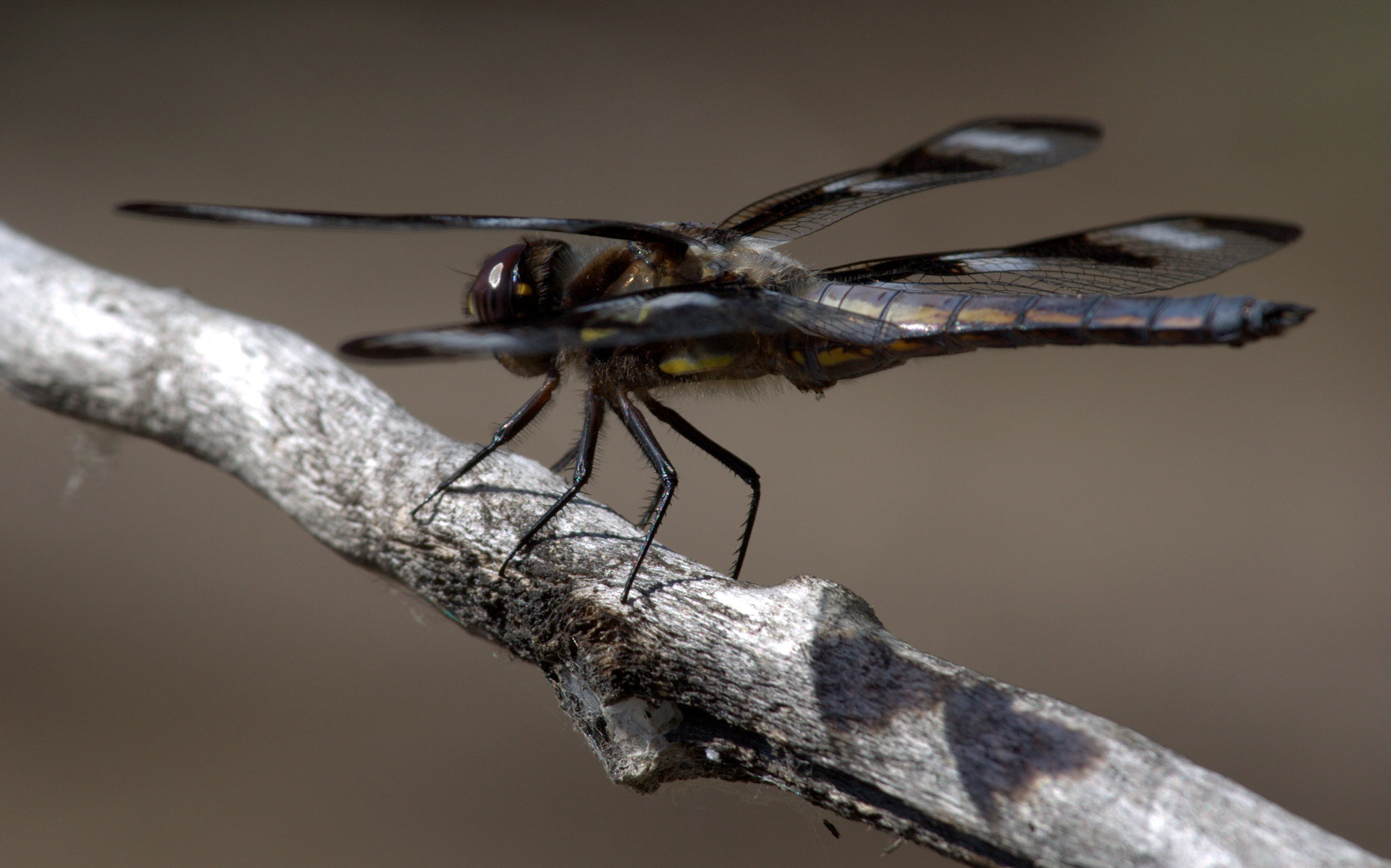 Photograph Dragonfly from our nature walk yesterday by Kevin Fechtelkotter on 500px
