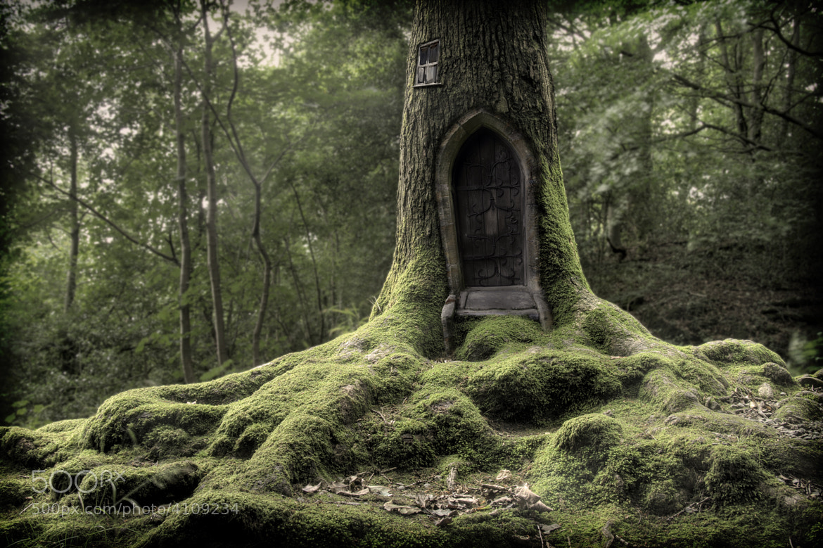 Photograph Tree house by Gary Dixon on 500px