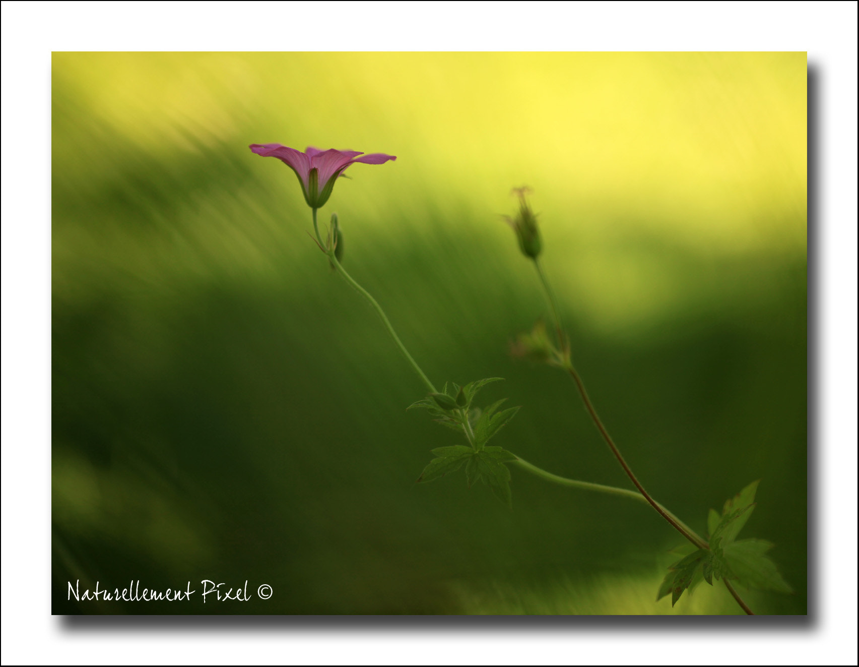 Photograph This is Life by Emilie Manier on 500px