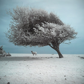 Spring Snow by Michael Baldwin (wreck_photography) on 500px.com