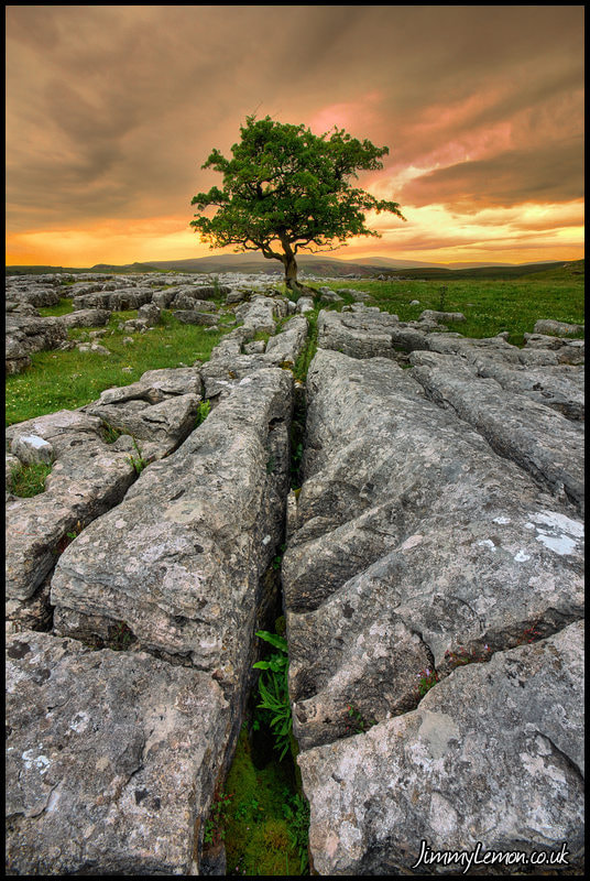 Photograph Limestone Tree At Sunset by Tom Holmes on 500px