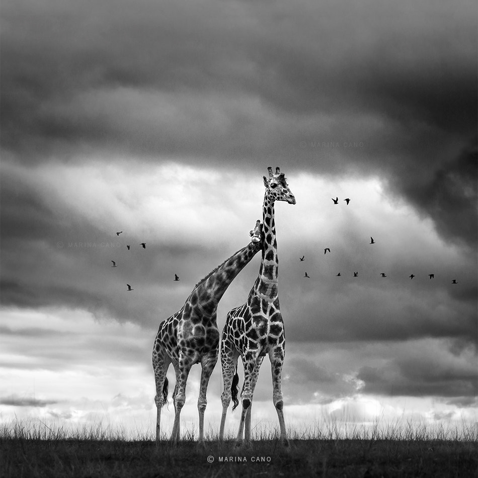 Photograph In LOVE with the WILD by Marina Cano on 500px