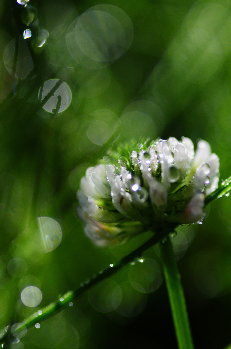Photograph In the middle of the glitter by tamotsu matsui on 500px