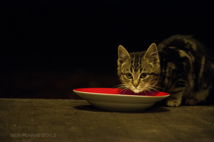 Photograph A stray at the door by Ben Pearse on 500px