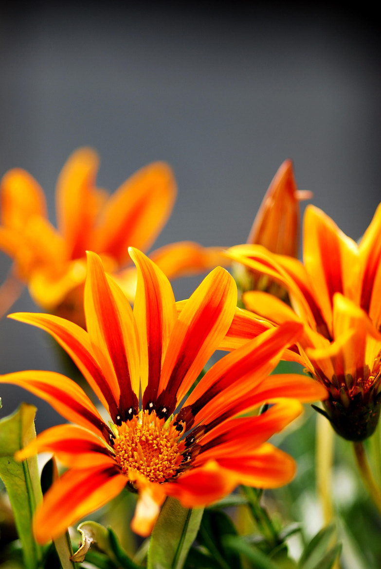 Photograph Flowers by Navdeep Raj on 500px
