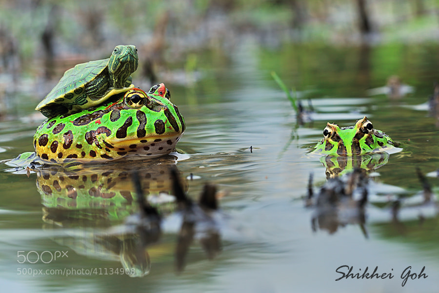 Photograph Ride On Me by shikhei goh on 500px