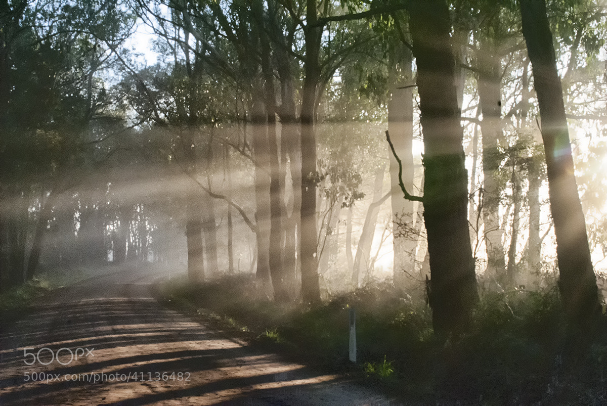 Photograph Morning Light by Shane Powell on 500px