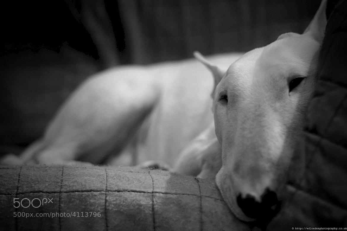 Photograph my dog by edo  zollo on 500px