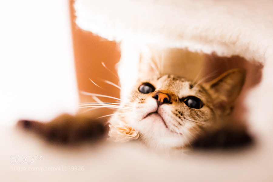 Photograph Hide and Seek by Seiji Mamiya on 500px