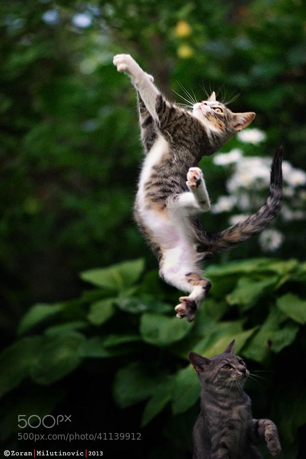 Photograph Supercat by Zoran Milutinovic on 500px