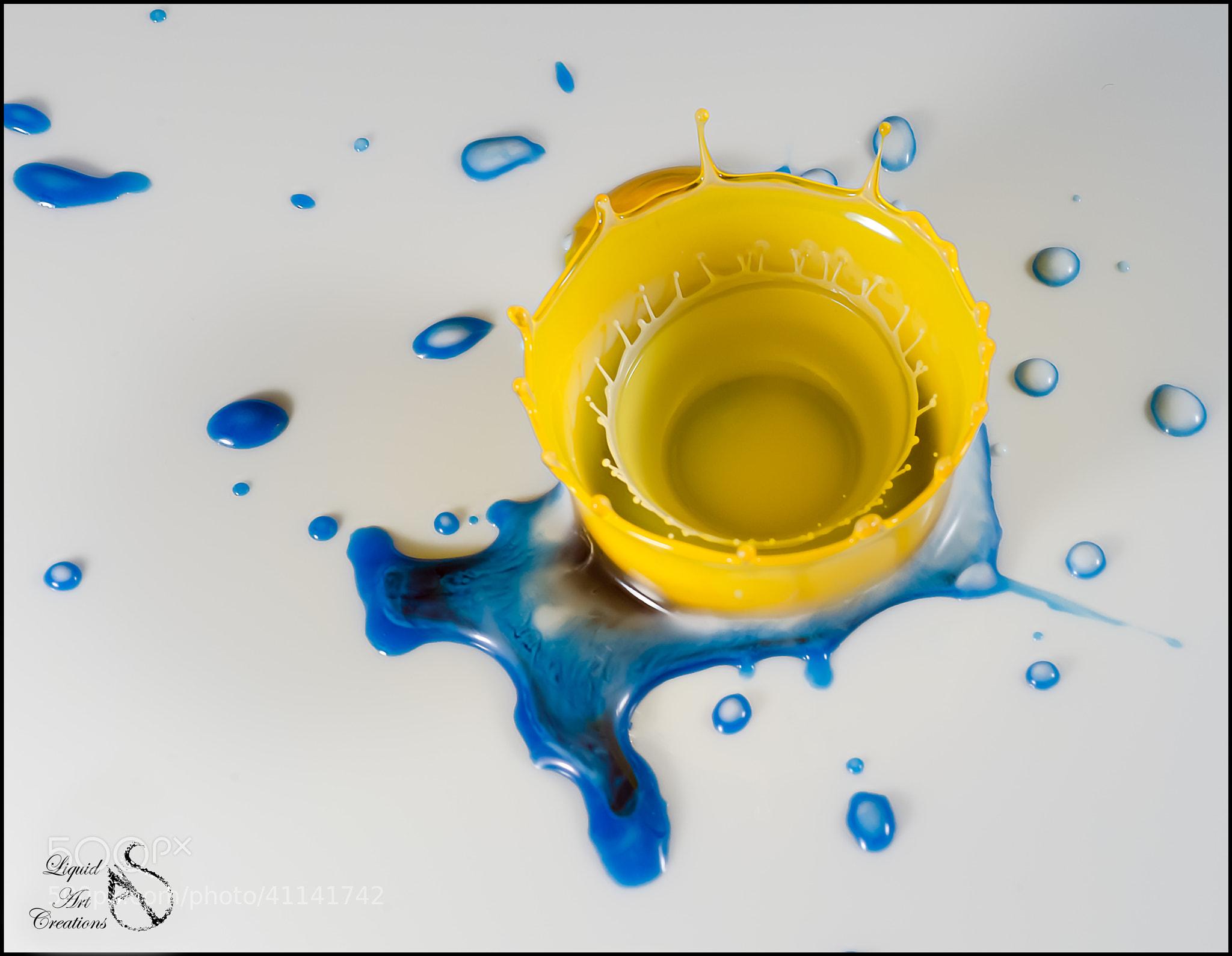 Photograph Kerria by LiquidArtCreations  on 500px