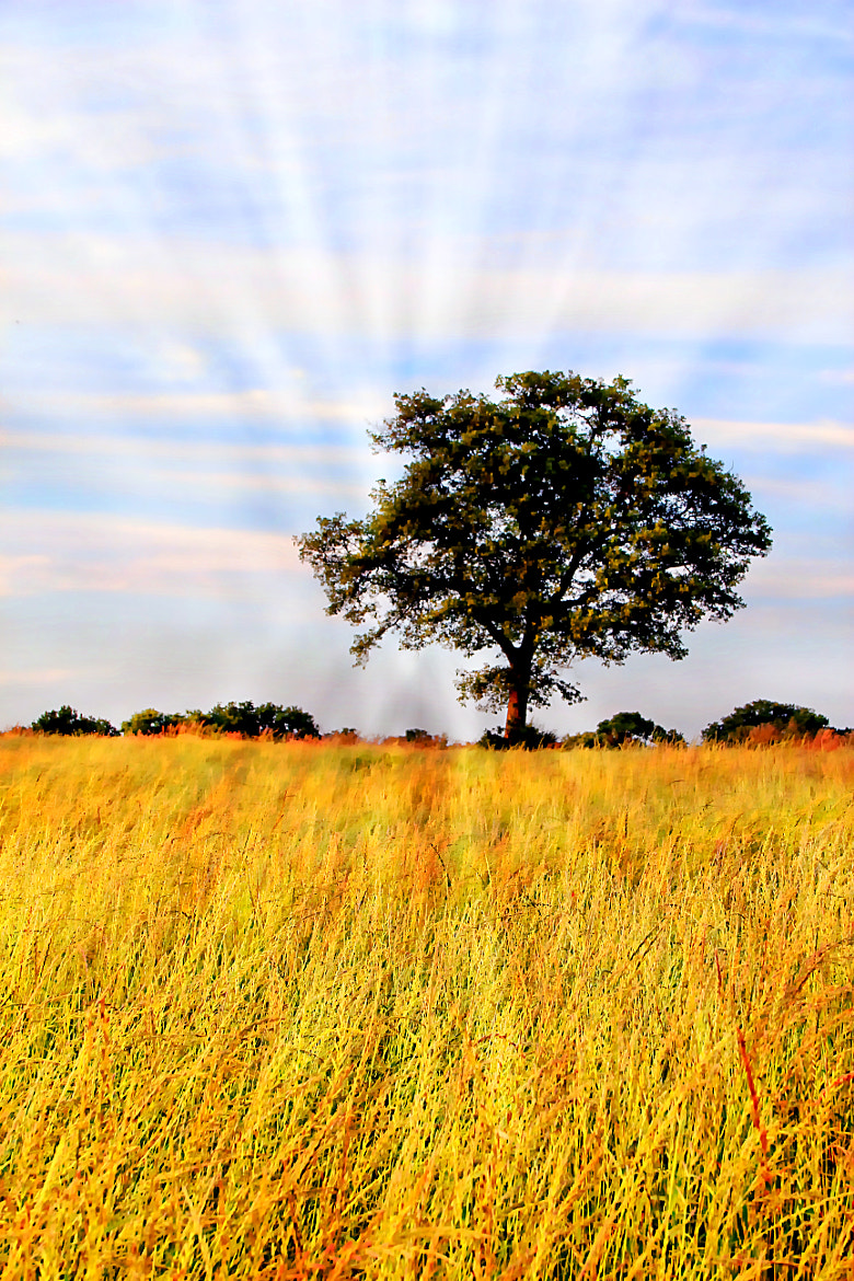 Photograph The Tree by Anne Costello on 500px